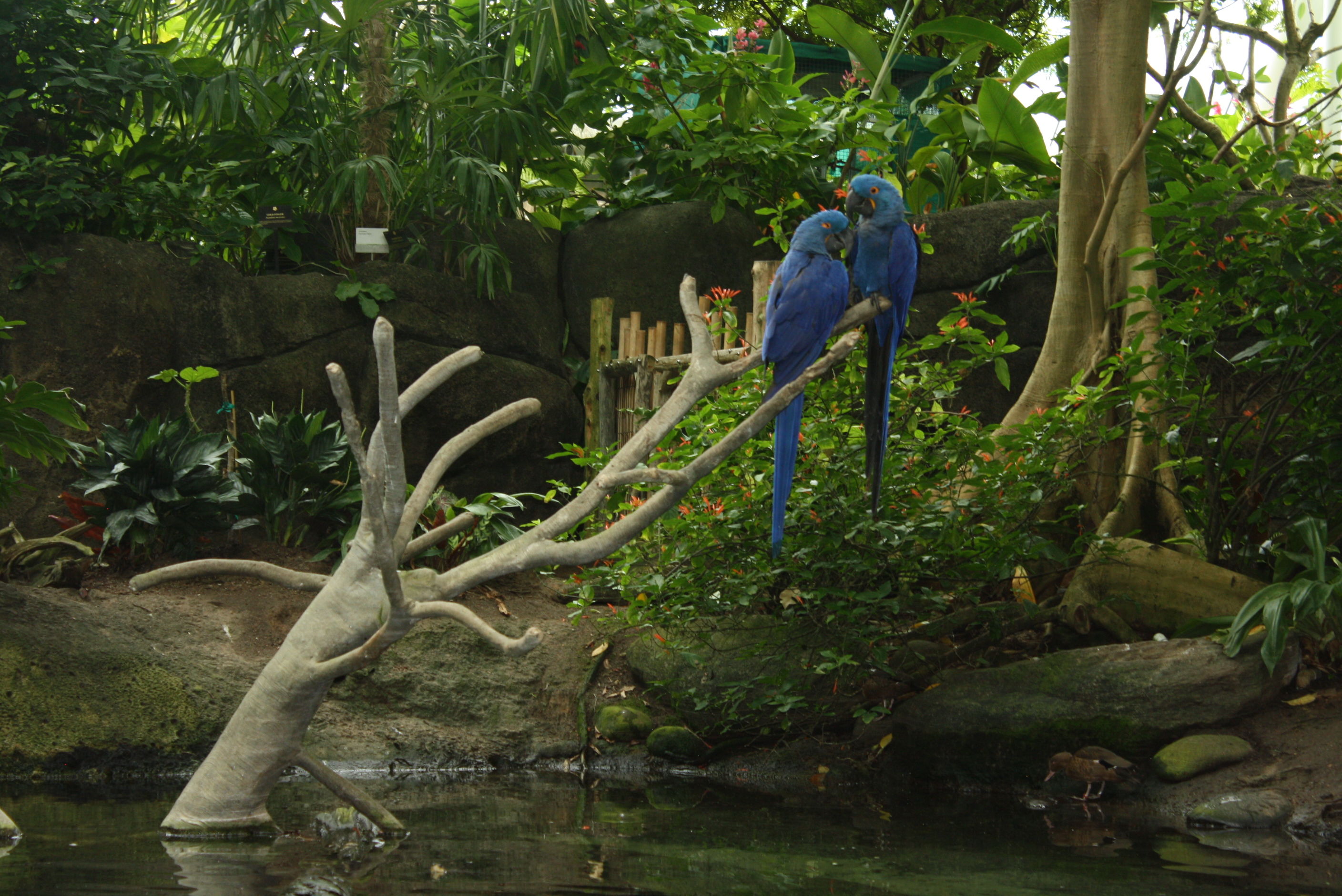 A Trip To Moody Gardens In Galveston Tx Travel