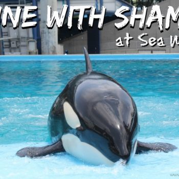 Dine With Shamu at Sea World San Antonio